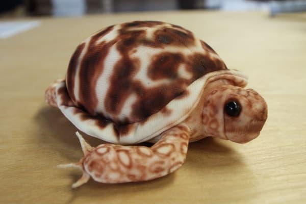 Custom Stuffed Turtle Toy