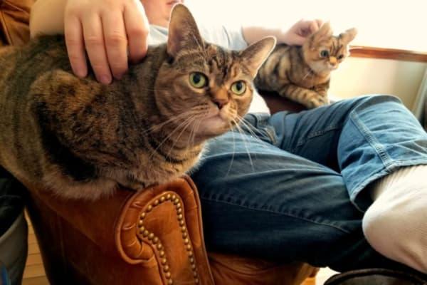 Design Your Own Cat Stuffed Animals, Plush Pets